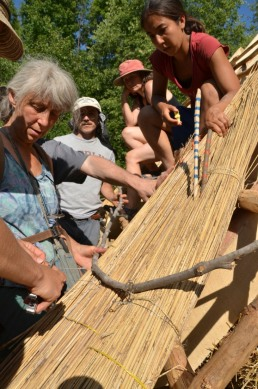 thatching with reed